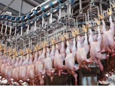 Россельхознадзор запретил ввоз птицы ияиц изрегионовЕС