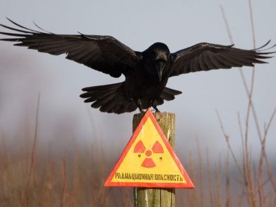 Обаварийном, экстремально высоком ивысоком загрязнении окружающей среды натерритории русской