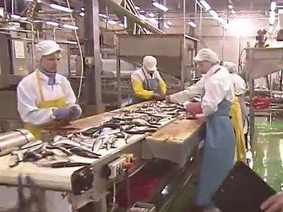 Бывшим сотрудникам рыбокомбината наШикотане выплатили долги