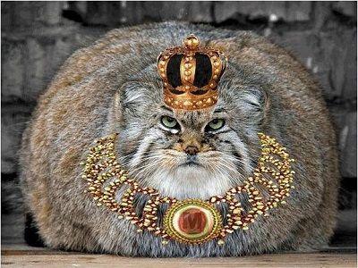 Кот царь картинки
