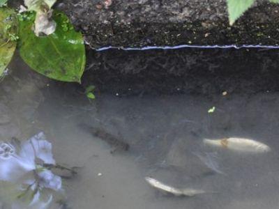 """Погибшая рыба. Фото: """"ЖЖ"""""""