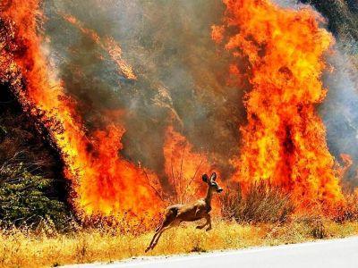 Лесной пожар (с плаката противопожарных служб). Фото: www.facebook.com/Ksenya.Remizova